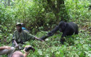 permiso de gorilas