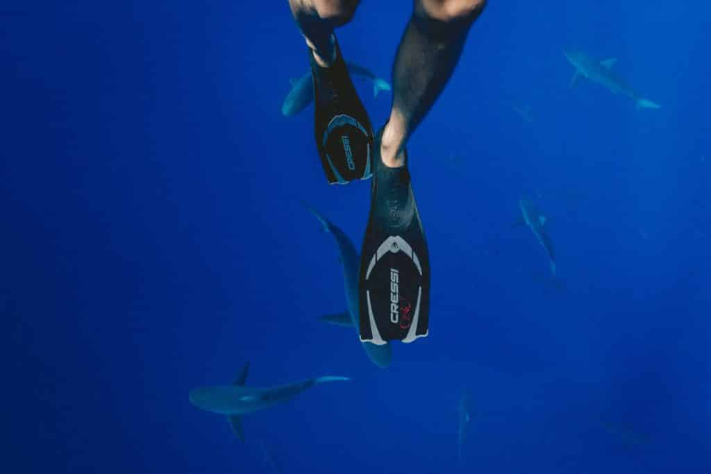 Diver in the Ocean with Sharks