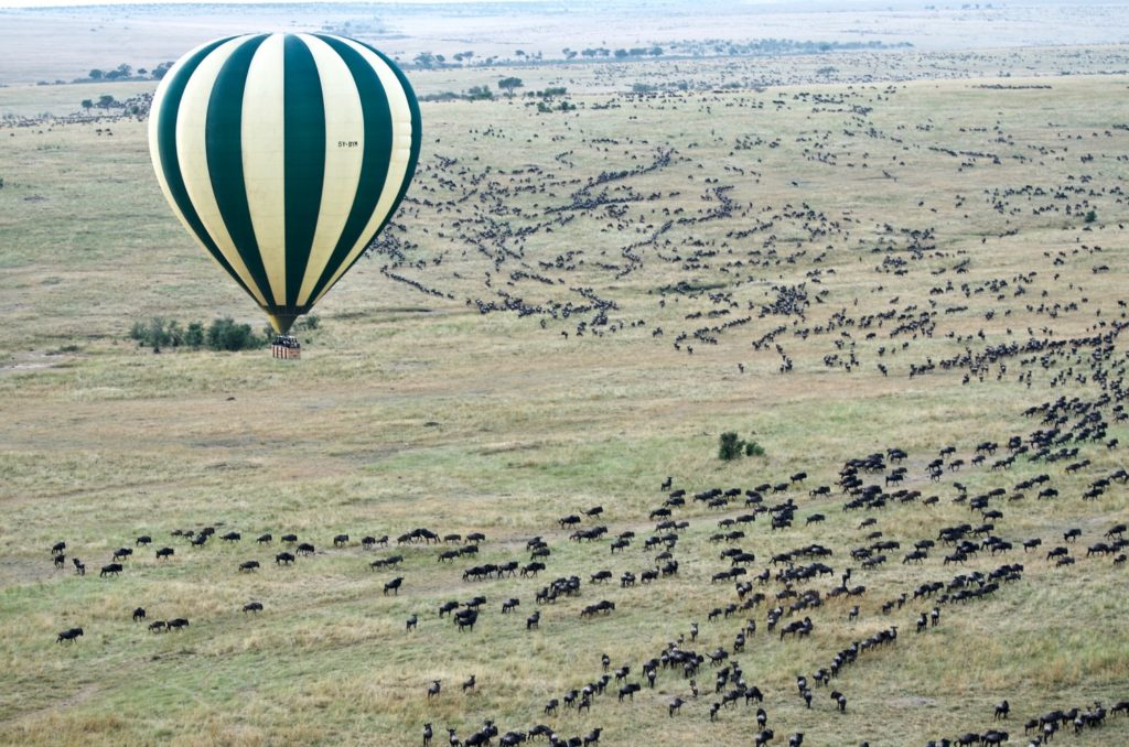 Wildebeest from above