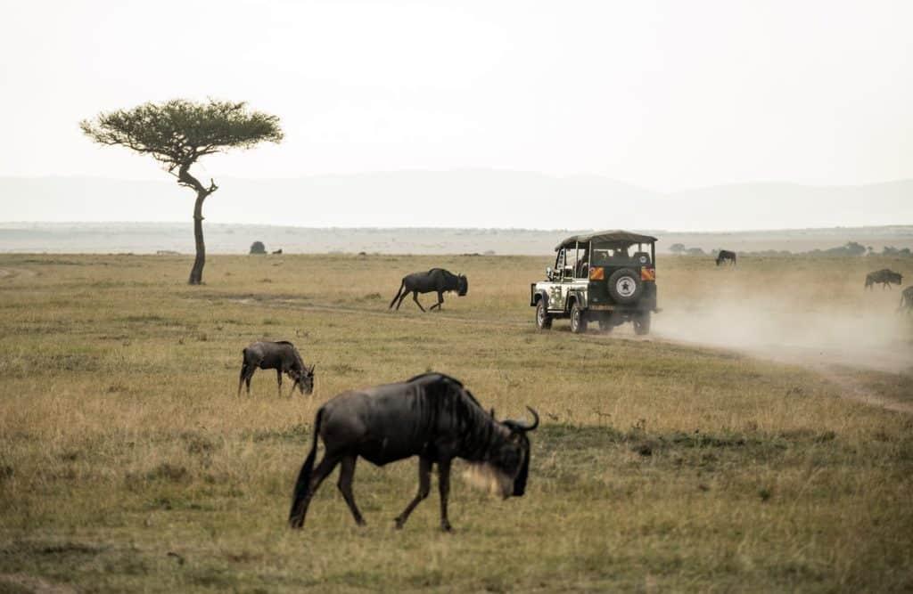 Top 10 Ideen, um Wildtiere zu sehen Wildebeest Safari