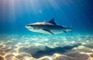 shark under water high definition