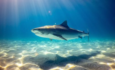shark under water high definition