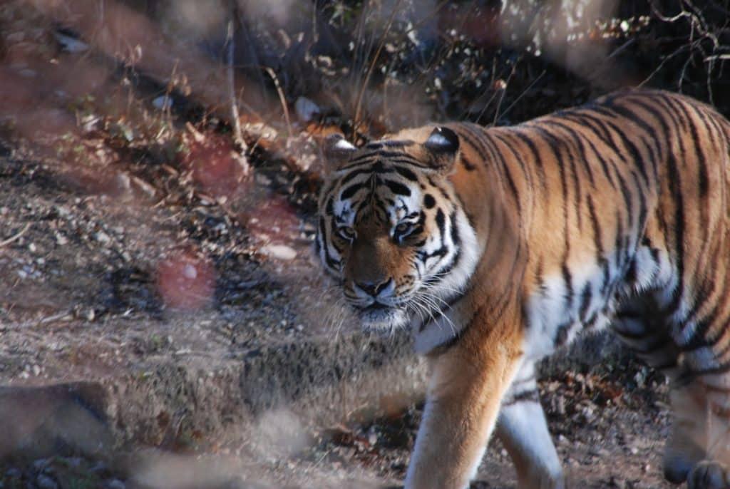 Bangladesh Tiger Safari on a guided tiger tour