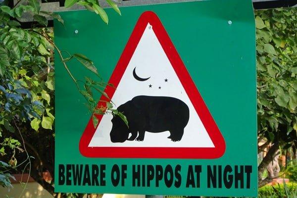 Hipopótamos en la noche