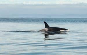 orca in costa rica