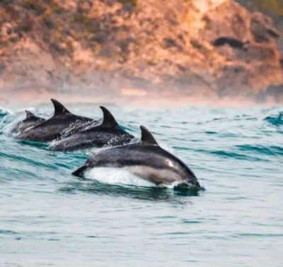 dolphins near coast
