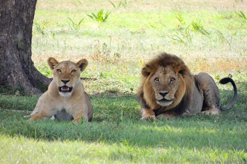 Best Places to See Lions