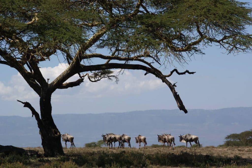 el mejor safari para ver los 5 grandes