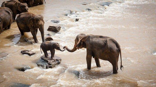 5 grandes elefantes