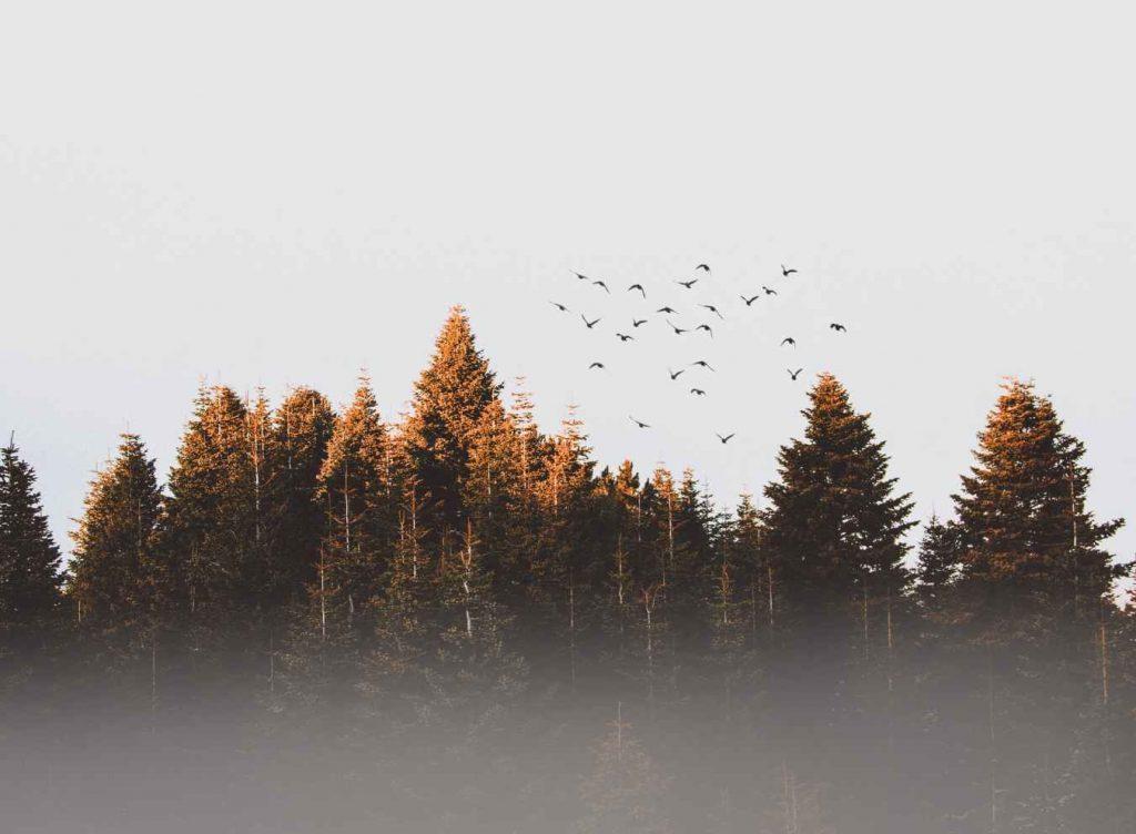 la niebla de los árboles