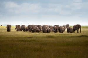 big 5 safari elephant