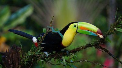 amazon animal bird