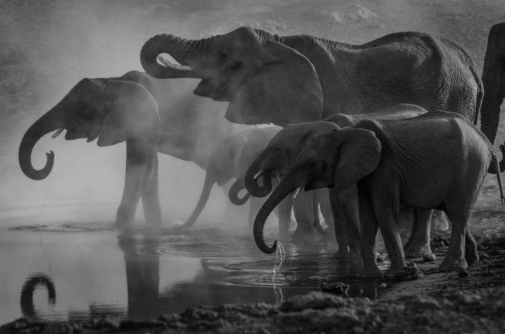 el mejor safari para ver a los 5 grandes elefantes
