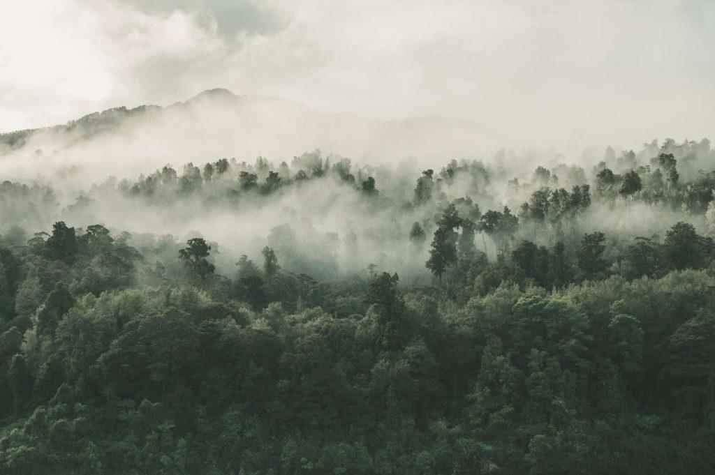 cambio climático en la amazonia