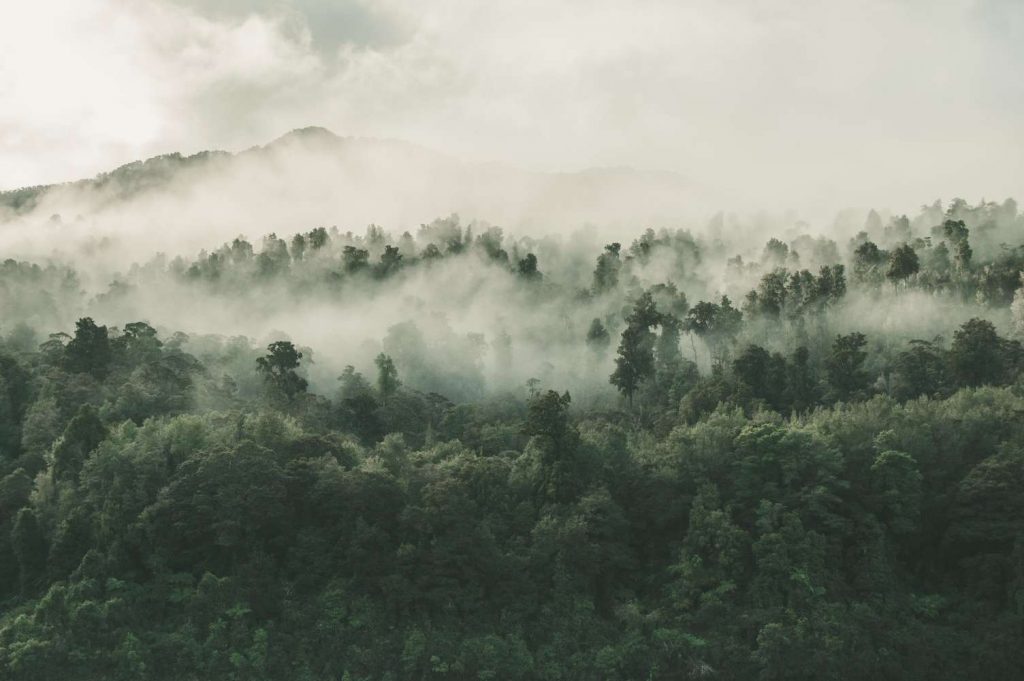 Klimawandel im Amazonasgebiet