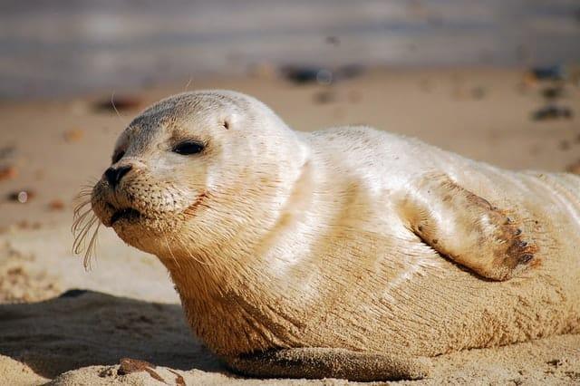 la fauna oceánica en la foca monje de grecia