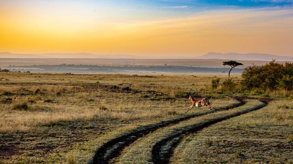 Safari en África, Kenya