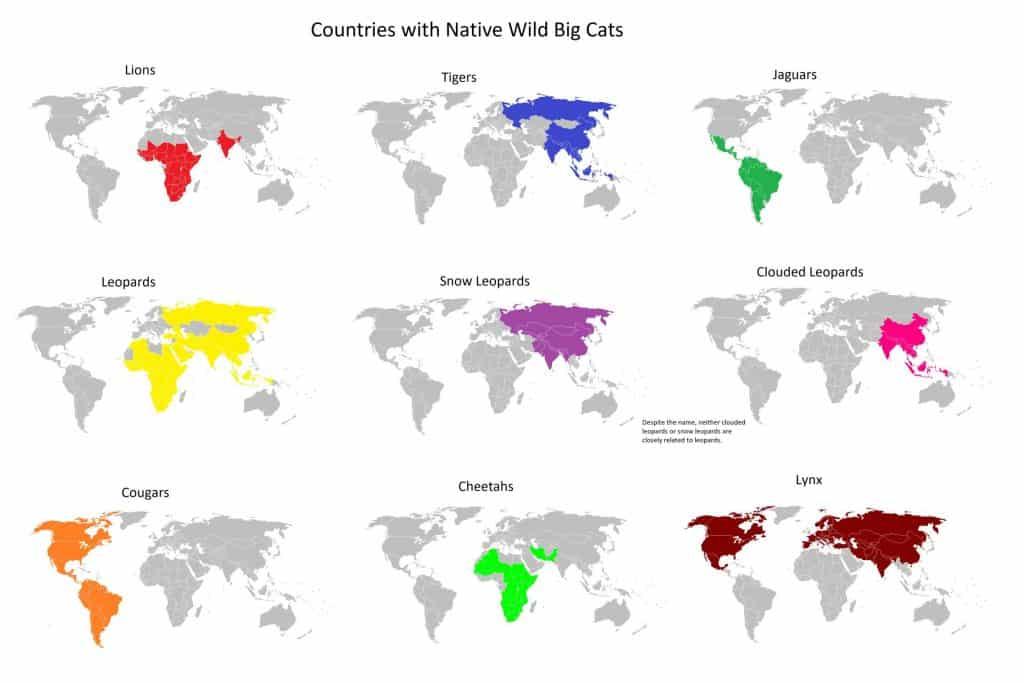 big cats locations