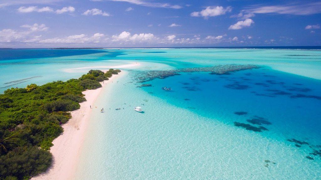 maldives hammerhead dive