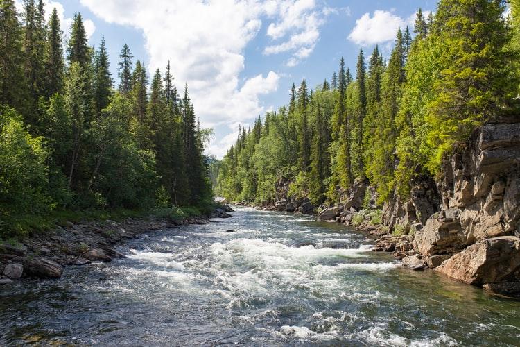 Nature of Sweden: Sweden's wildlife