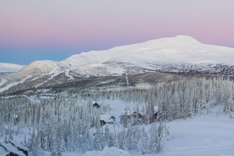 La vida silvestre de Suecia como una perspectiva de invierno nevado
