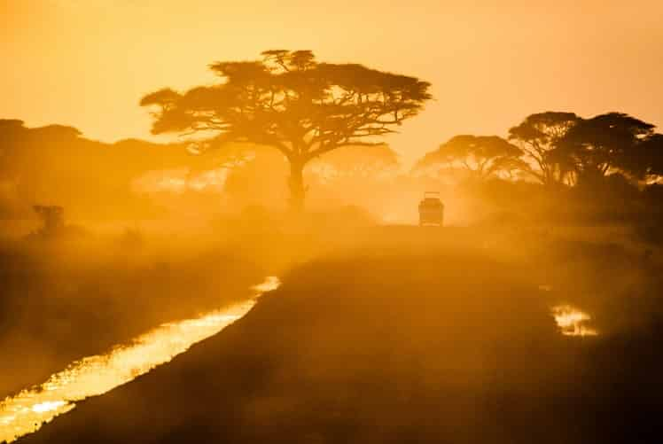 Recorrer las escenas de safari de Zambia