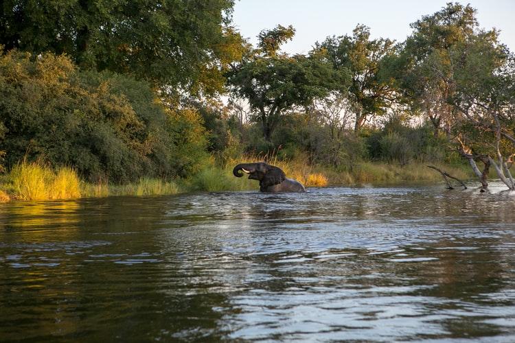 Recorrido por Zambia en el río Zambezi