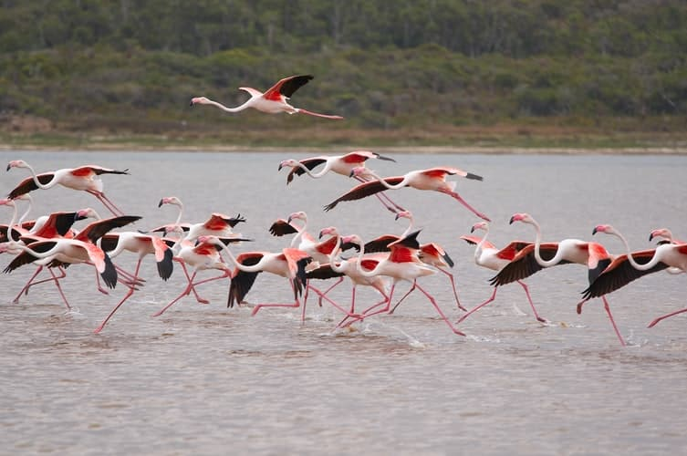 Flamingos during lockdown in Albania