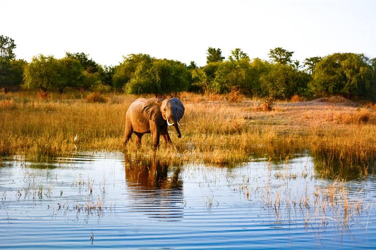 Tour Zambia: visita al lago Kariba. Lago kariba y elefante