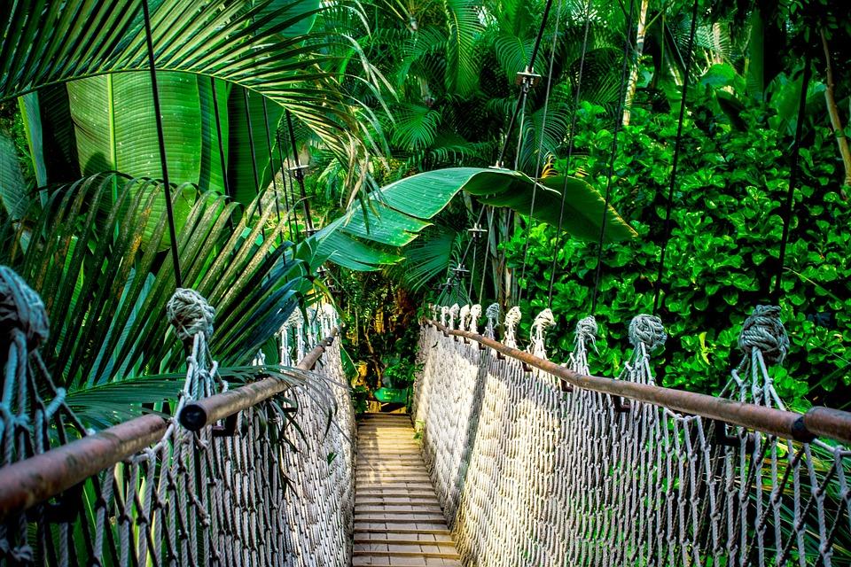 Land des Jaguar-Hahnenkammbecken-Wildschutzgebietes, Belize