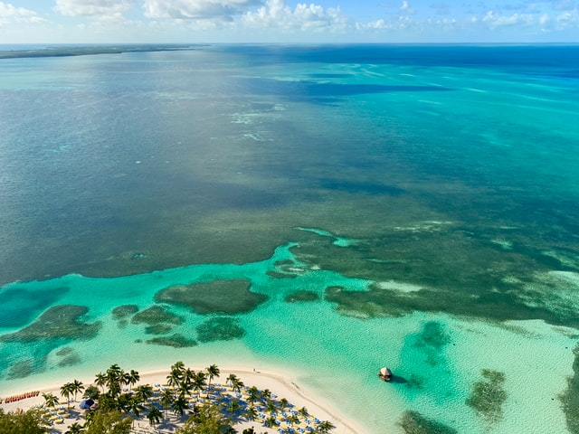 dive with sharks in bimini bahamas