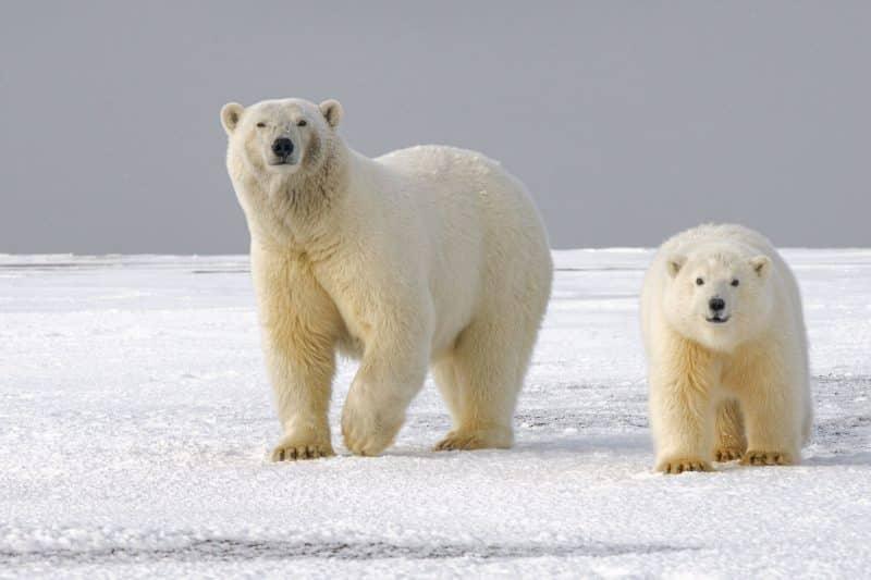 Los Osos Alrededor Del Mundo Animals Around The Globe