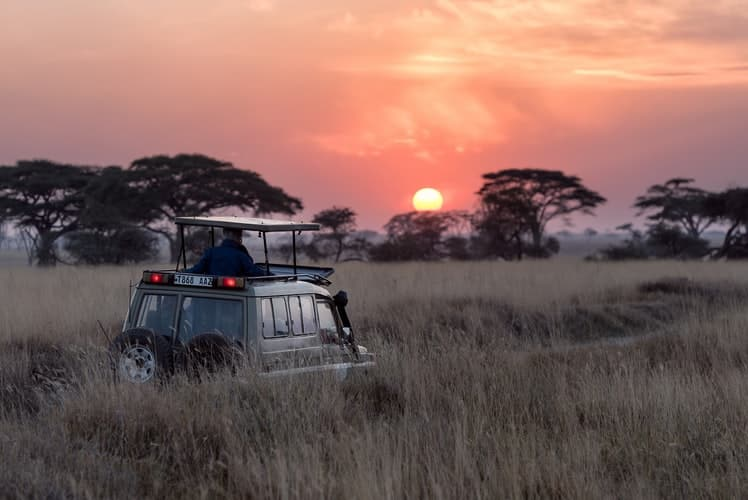 Safari when visit Africa