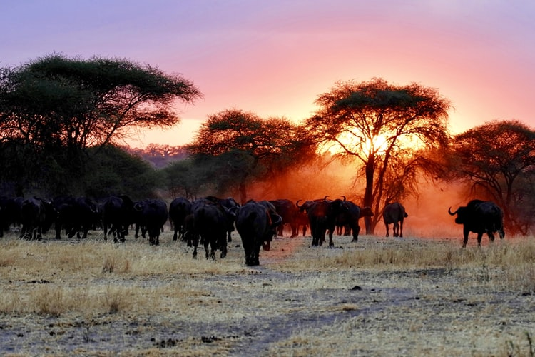 visit africa for wildebeest migration