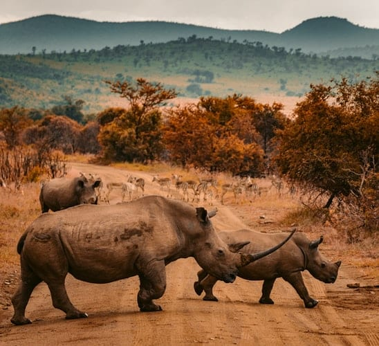 see rhinos when you visit africa