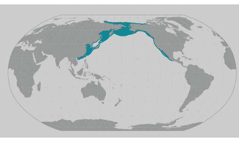 a map showing where to see gray whales