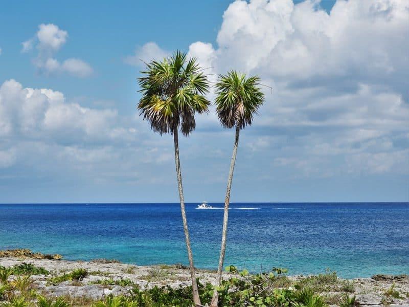 home to boa snakes cozumel island