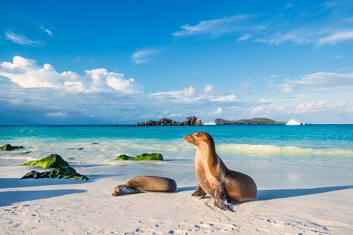 swim with seals at the galapagos islands