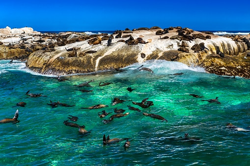 swim with seals at duiker island