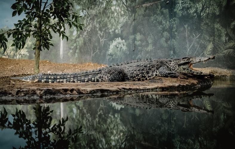 wo man Krokodile in freier Wildbahn sehen kann