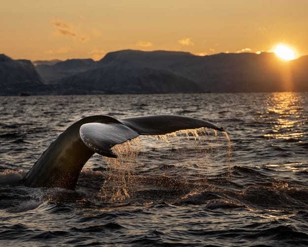 whale tale in norway on orca tour