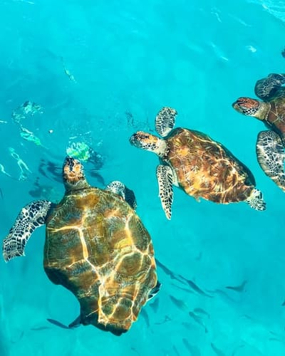 sea turtle reptiles