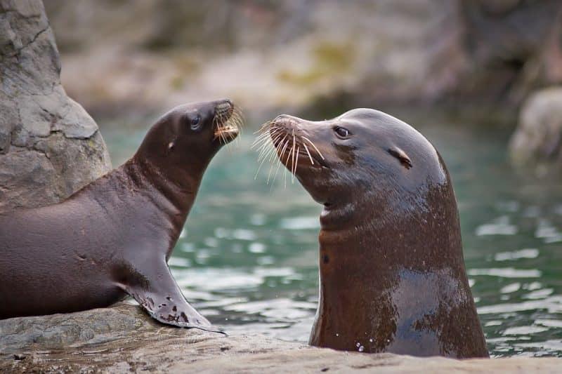 Seehund und ein Baby