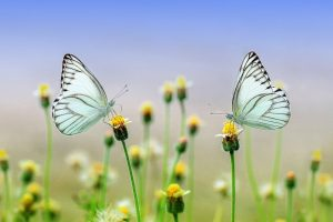 Schmetterlinge Naturverbundenheit