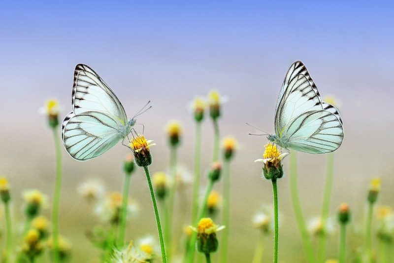 butterflies connect to nature