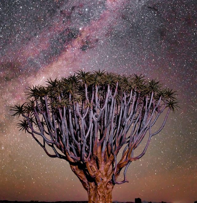 namibia and stars