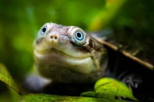 Turtle in Africa