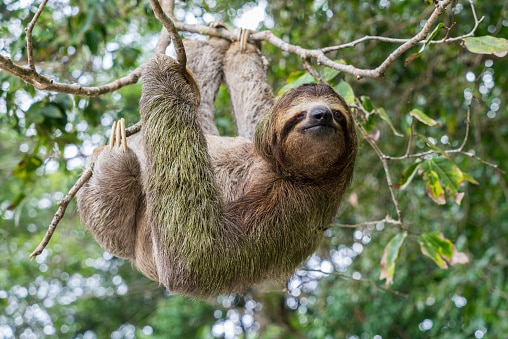 Best Places to see Sloths trees