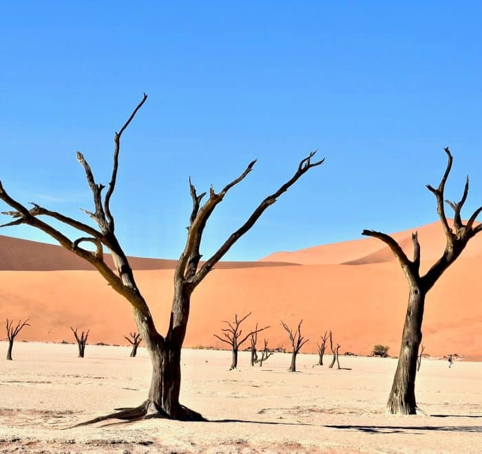 trees and dust in namibia