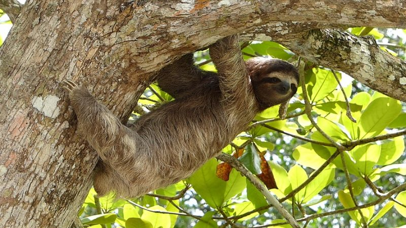 Best Places to see Sloths